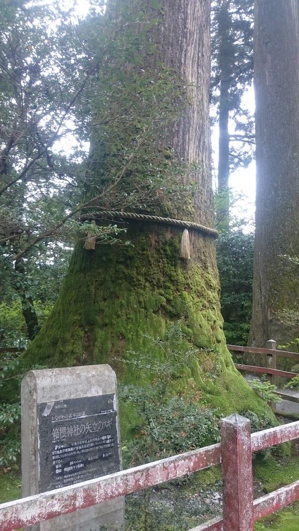 練馬区、中村橋・富士見台、サヤン鍼灸院・接骨院、箱根、矢立手の杉。