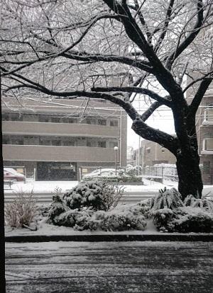 練馬区、中村橋・富士見台、サヤン鍼灸院・接骨院ブログ、雪景色