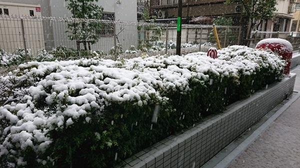 練馬区、中村橋・富士見台、サヤン鍼灸院・接骨院ブログ、植え込みの雪
