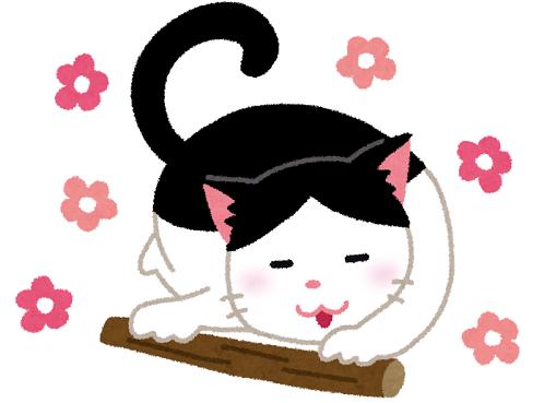 練馬区、中村橋・富士見台、サヤン鍼灸院・接骨院ブログ、猫とマタタビ