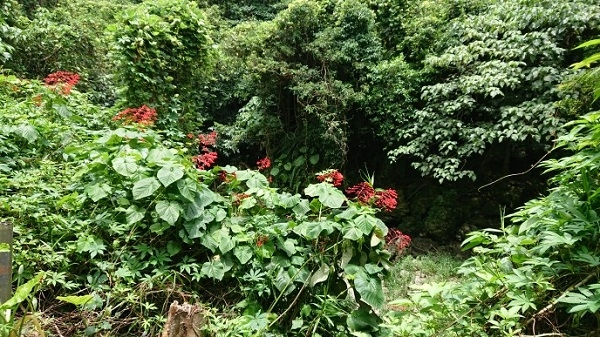 練馬区、中村橋・富士見台、サヤン鍼灸院・接骨院ブログ、ガンガラーの谷、武芸洞窟への道