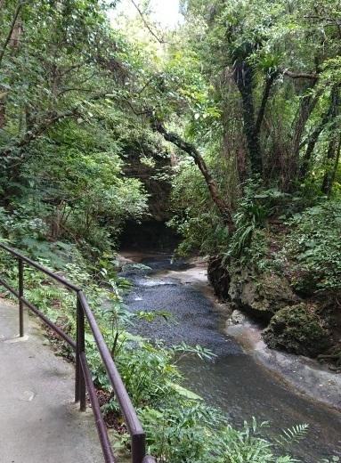 練馬区、中村橋・富士見台、サヤン鍼灸院・接骨院ブログ、ガンガラーの谷、川辺2
