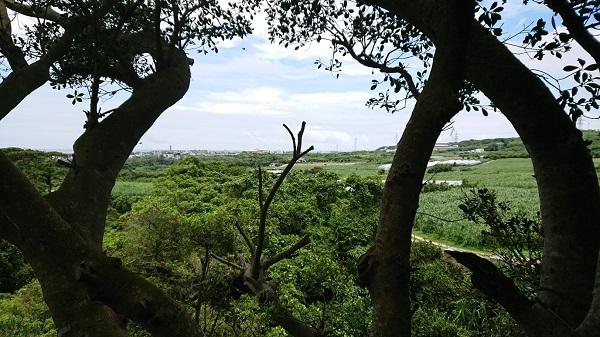 練馬区、中村橋・富士見台、サヤン鍼灸院・接骨院ブログ、ガンガラーの谷、ツリーテラスの上1
