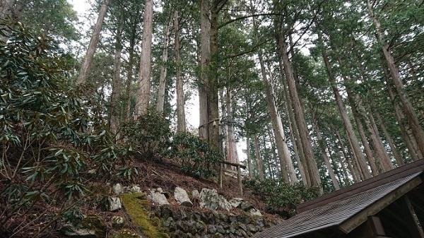 練馬区、中村橋・富士見台、サヤン鍼灸院・接骨院ブログ、三峰神社、縁結びの木