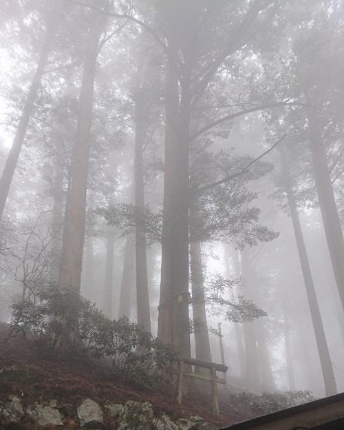 練馬区、中村橋・富士見台、サヤン鍼灸院・接骨院ブログ、秩父、三峰神社・えんむすびの木