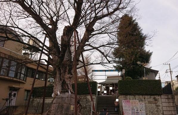 練馬区、中村橋・富士見台、サヤン鍼灸院・接骨院ブログ、練馬、白山神社