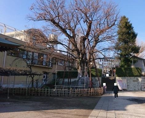 練馬区、中村橋・富士見台、サヤン鍼灸院・接骨院ブログ、練馬白山神社、入口