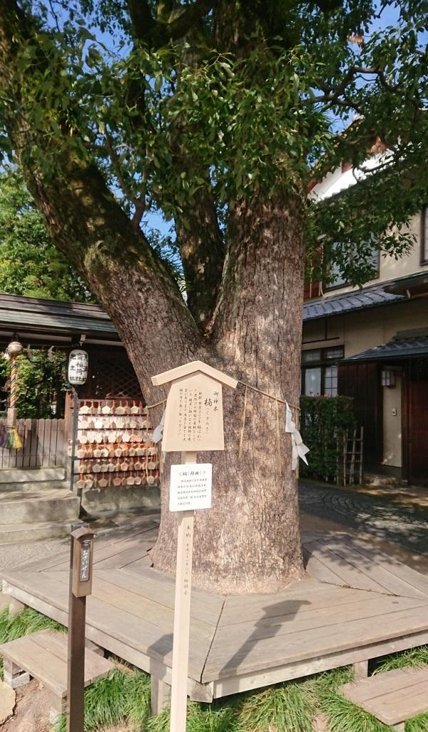 練馬区、中村橋・富士見台、サヤン鍼灸院・接骨院ブログ、京都・晴明神社・楠