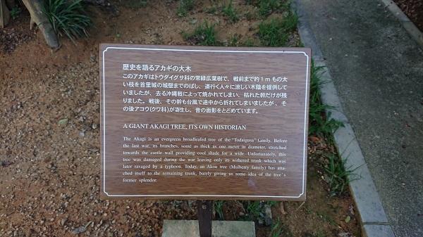 練馬区、中村橋・富士見台、サヤン鍼灸院・接骨院ブログ、アカギの木、看板