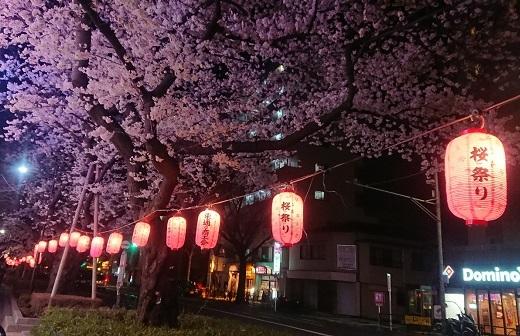 練馬区、中村橋・富士見台、サヤン鍼灸院・接骨院ブログ、夜桜1